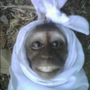 hantu pocong lucu versi monyet