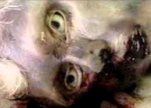 gambar anak durhaka setelah kena siksa kubur