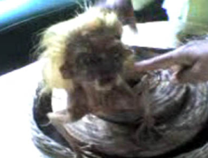 gambar anak durhaka setelah menyepak ibunya ketika shalat dan di kutuk menjadi ular