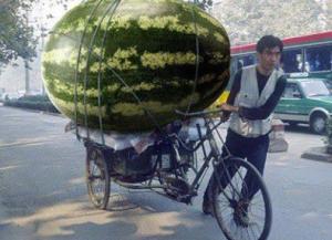 gambar seseorang sedang membawa buah semangka besar dengan becaknya