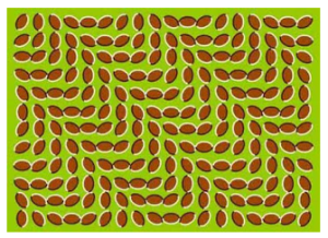 Ini hanya gambar biasa, namun mengapa seolah bergerak  jika kamu lihat bergerak berarti gambar ini menghipnotis kamu