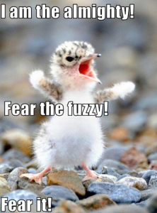 funniest animal pictures and captions