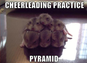 funniest animal pictures and quotes
