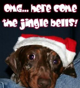 funniest animal pictures for christmas