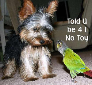 funniest animal pictures for facebook
