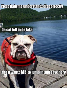 funniest animal pictures with sayings