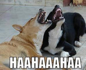 funny animal reaction saying for jokes status