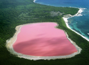 Pink Lake Pictures