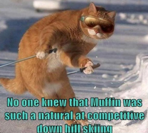 Funny animals pictures of 2015
