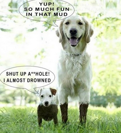 Funny animal jokes clean - photo#4