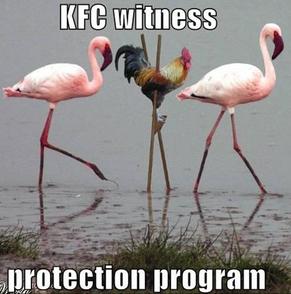images funny chikkens