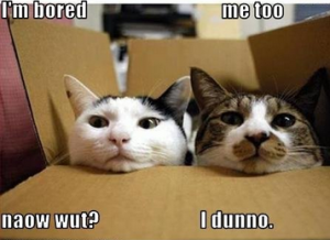 images funny pictures cats