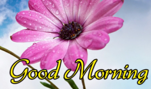 Happy Morning images for beautiful