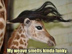 funniest animal pictures captions