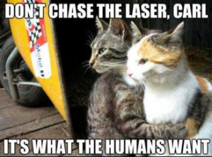 funniest cat pictures captions