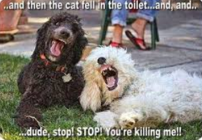 funny captions for selfies with friends