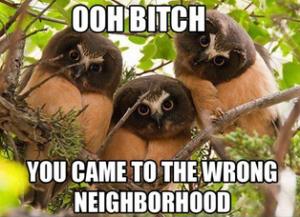 funny cat pics captions