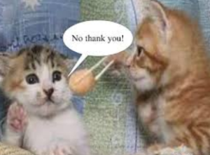really funny cat pictures