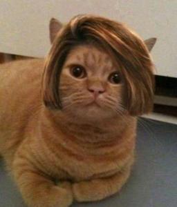 college humor cat best funny cat pictures