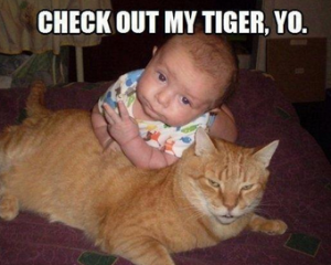 Funny Baby tiger with Pictures