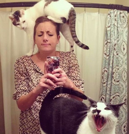 kucing bisa tularkan penyakit ini ke manusia