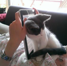 kucing termahal dunia, unik banget