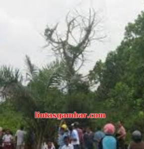 lafaz Allah pada pohon