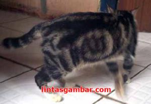 nama Allah tertulis indah di tubuh seekor kucing