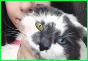 Gambar kucing bermata unik