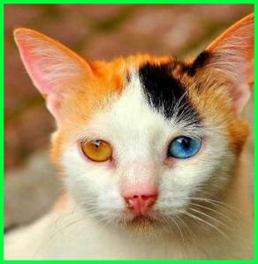 ich mata kucing ini indah banget