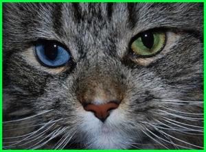 Lihat mata kucing ini, indah banget khan..