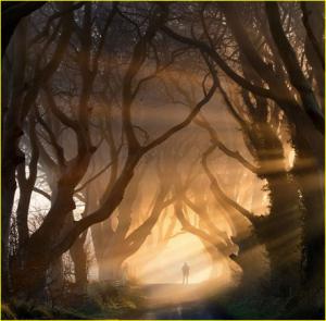 Pohon kegelapan, namanya menyeramkan tapi ini sanga mengagumkan