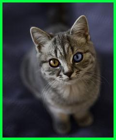 warna mata kucing ini gak kalah lebih indah