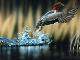 flying_duck-t2
